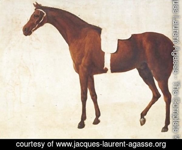 Jacques Laurent Agasse - Study Of A Saddled Horse Held By A Man At The Bridle