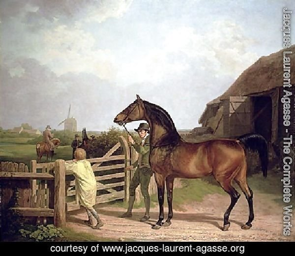 Bay Ascham   A Stallion Led Through A Gate To A Mare